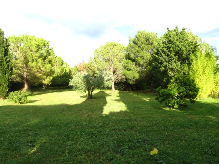 nadia's garden-opt