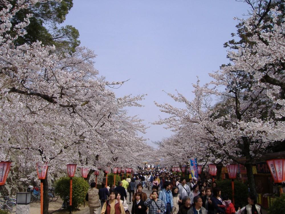 148-Tsuyama_Cherry_Blossom_Festival